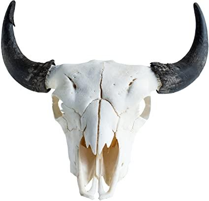 Harlow Ranch Bison Skull